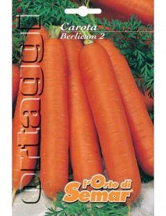 Semi di carota Berlicum in...