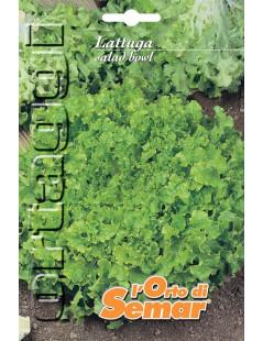 Semi di lattuga Salad Bowl...