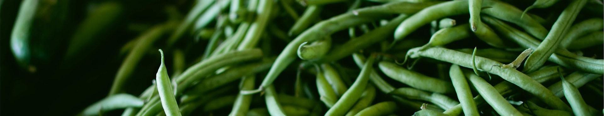 Semi di fagiolo