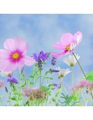 Semi di fiori